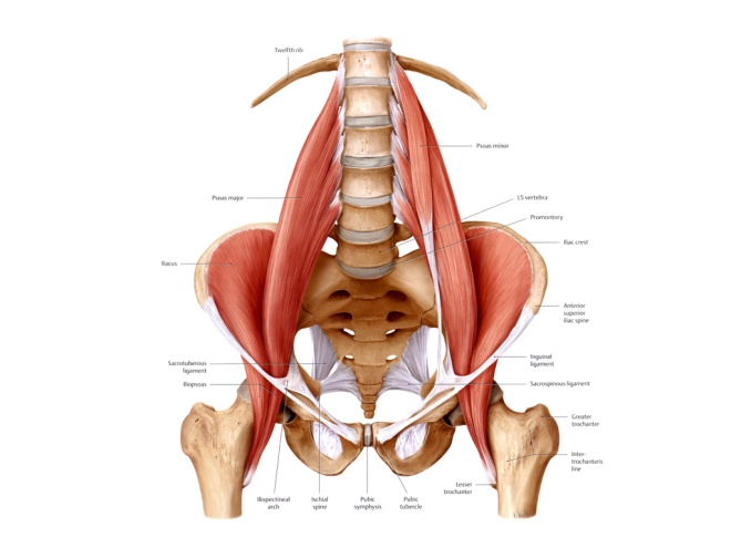 The Psoas: Muscle of The Soul