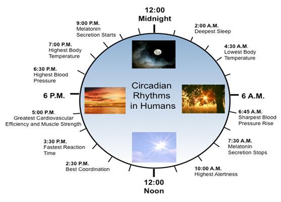 CircadianRhythms