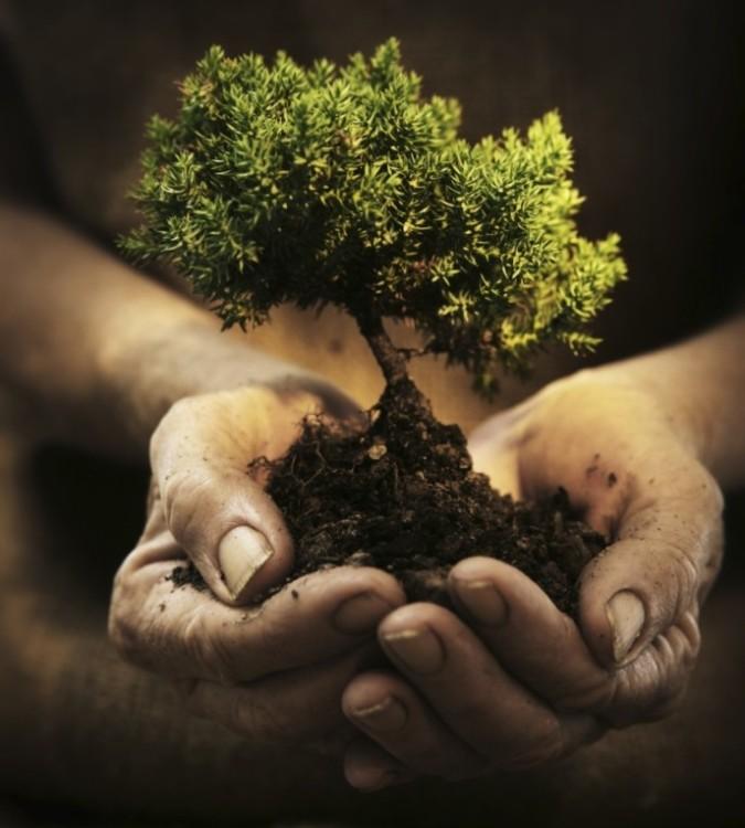 hands-holding-a-small-tree-hidesy.jpg.opt688x764o0,0s688x764