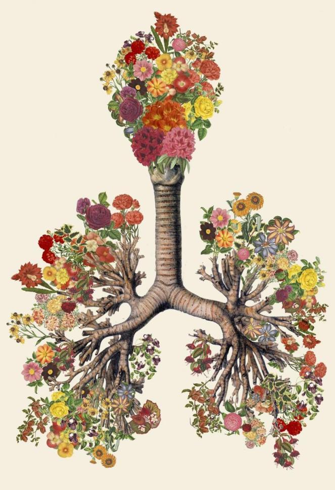 Travis Bedel, Anatomical Collage