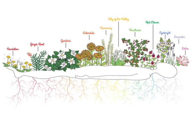 savasana-chakra-gardenblog