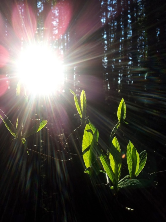 sunsacred.jpg